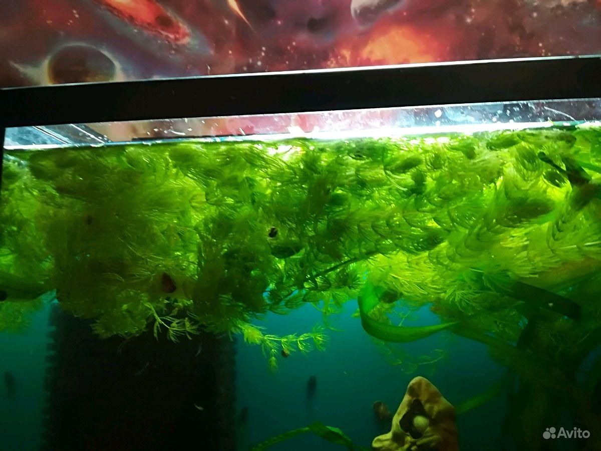 Водоросли Украшение для аквариума