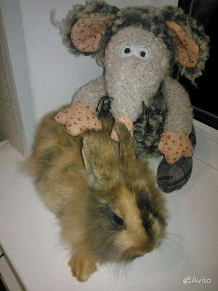 Декоративные кролики в Шебекино - фотография № 2