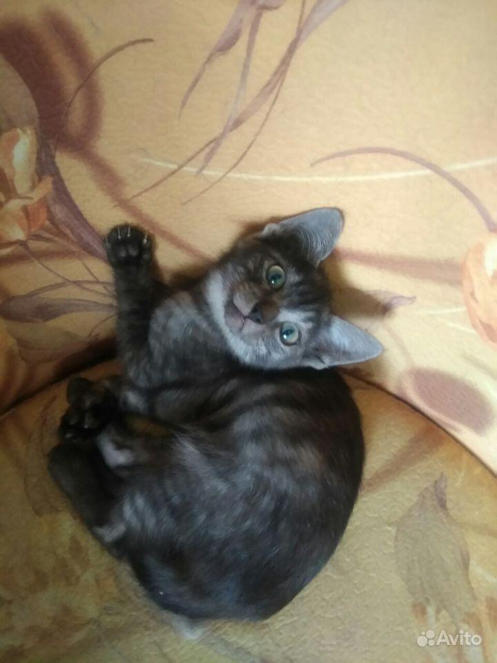 Отдам котят - фотография № 4
