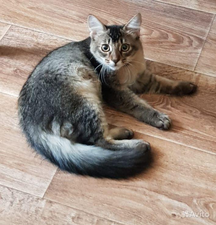 Котик-Чаузи