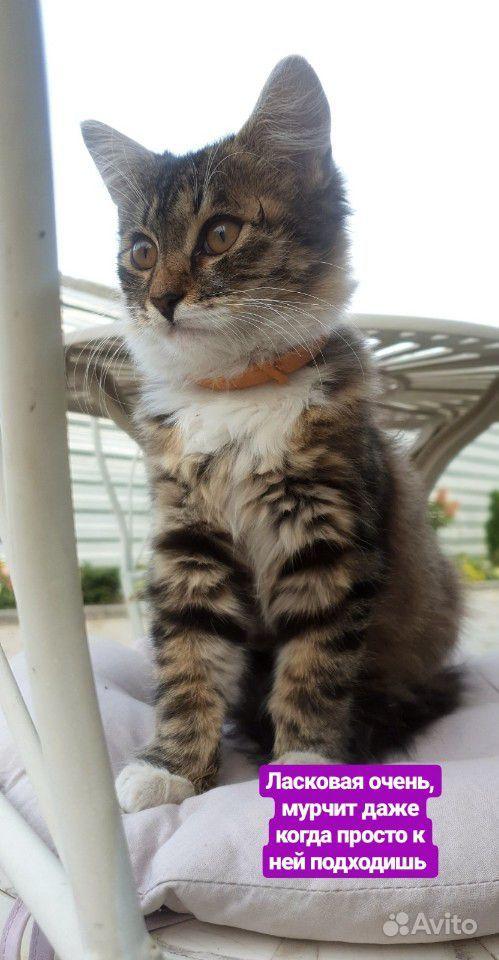 Отдам в добрые руки котенка в Воронеже - фотография № 2