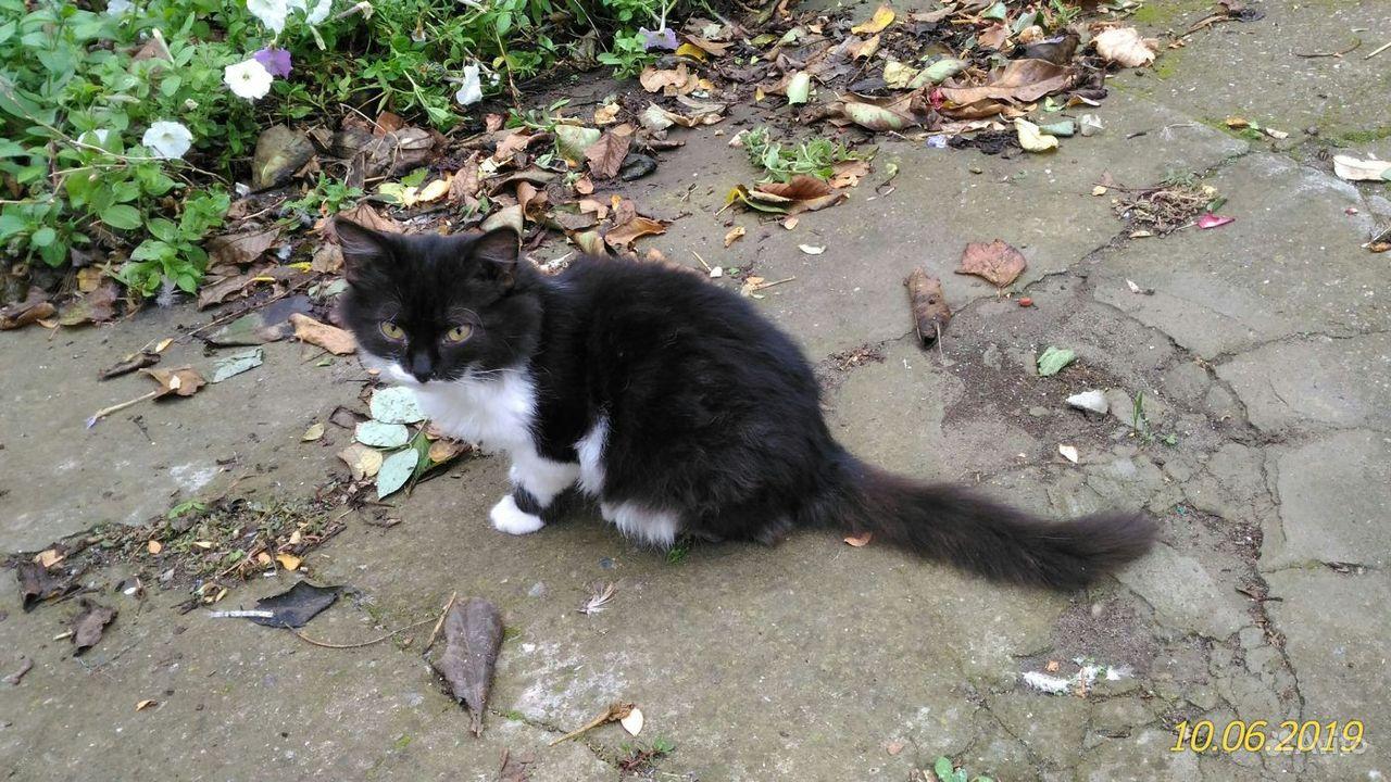 Котята, в добрые руки - фотография № 5