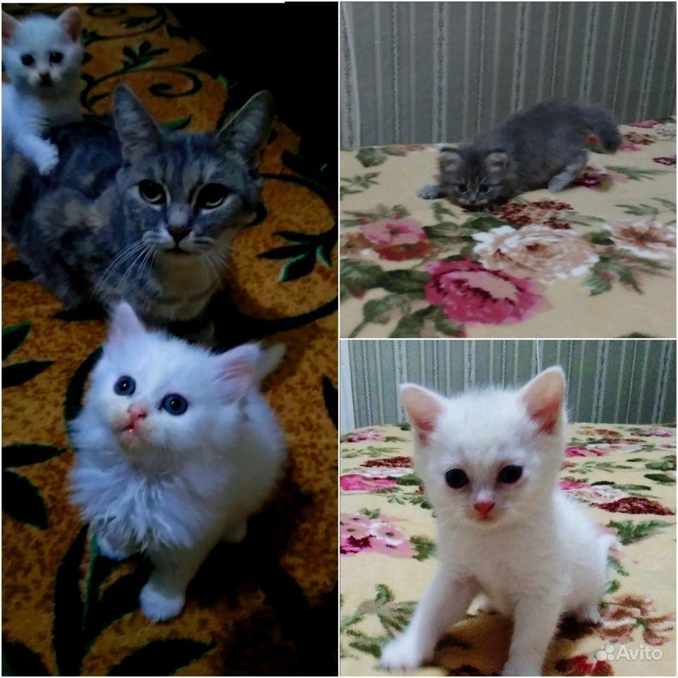 Котята - фотография № 1