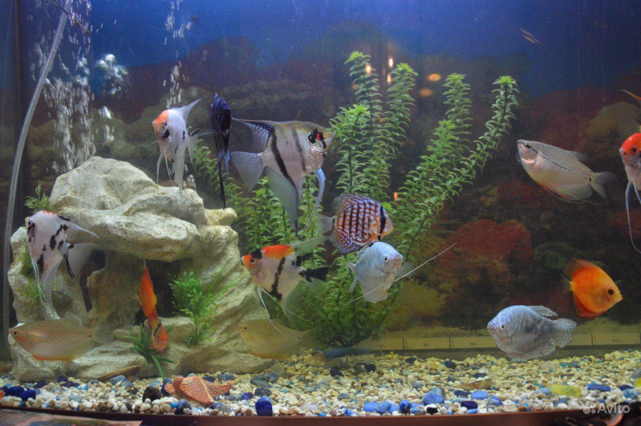 Аквариум Tetra Тетра 130 литров Tetra Aqua Led 130 купить на Зозу.ру - фотография № 3