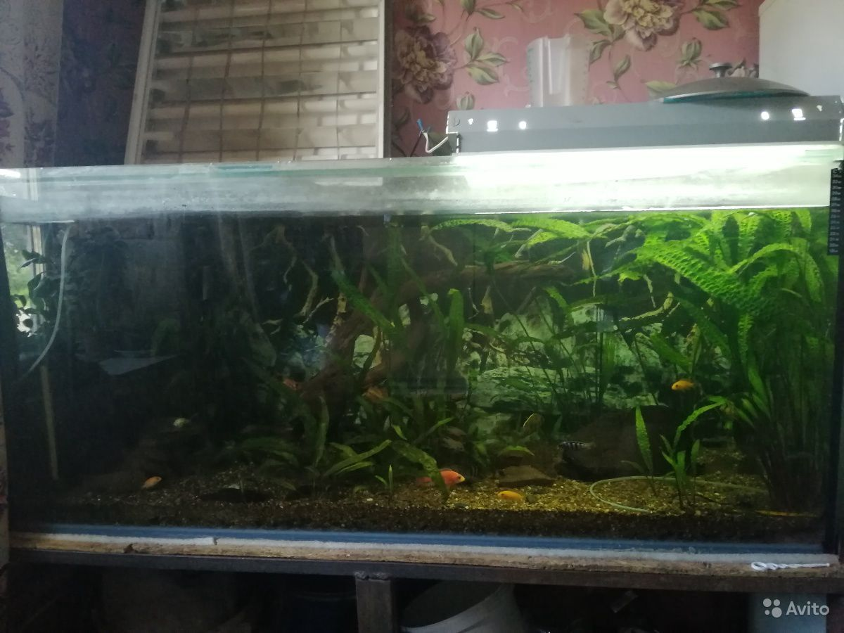 Украшение для аквариума купить на Зозу.ру - фотография № 3