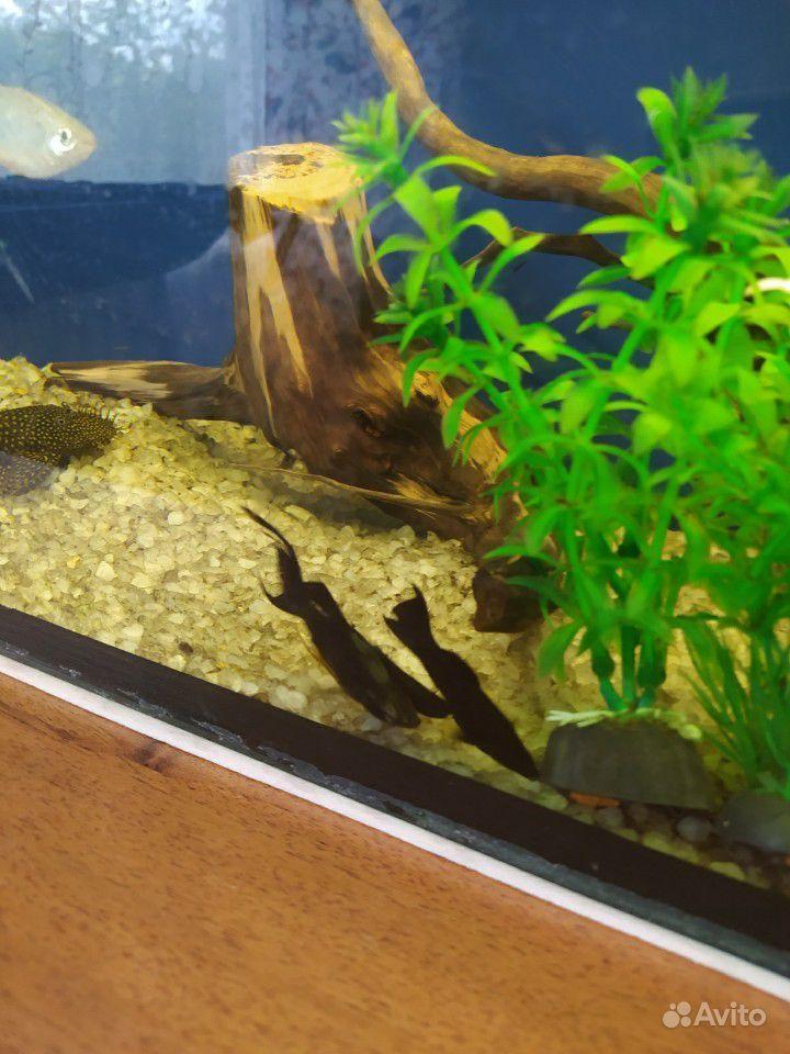 Аквариум 80л + рыбки купить на Зозу.ру - фотография № 4