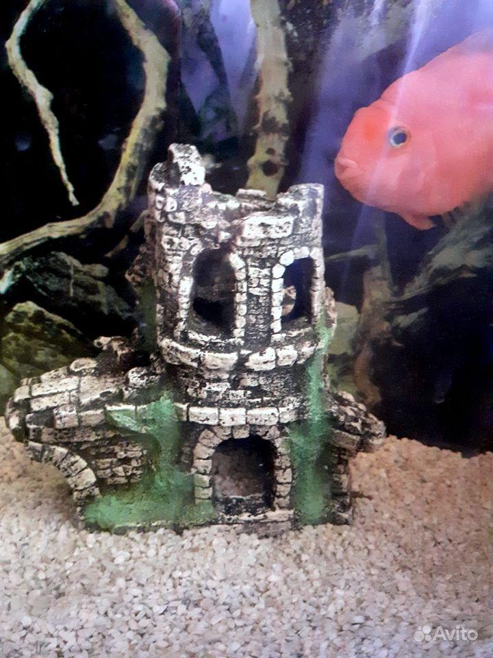 Продам аквариум с попугаем купить на Зозу.ру - фотография № 3