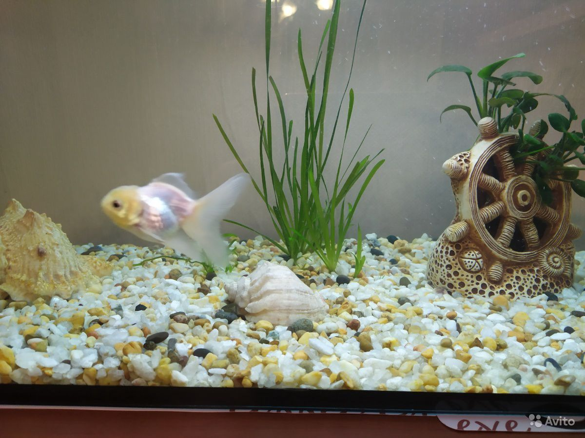 Рыбки купить на Зозу.ру - фотография № 1