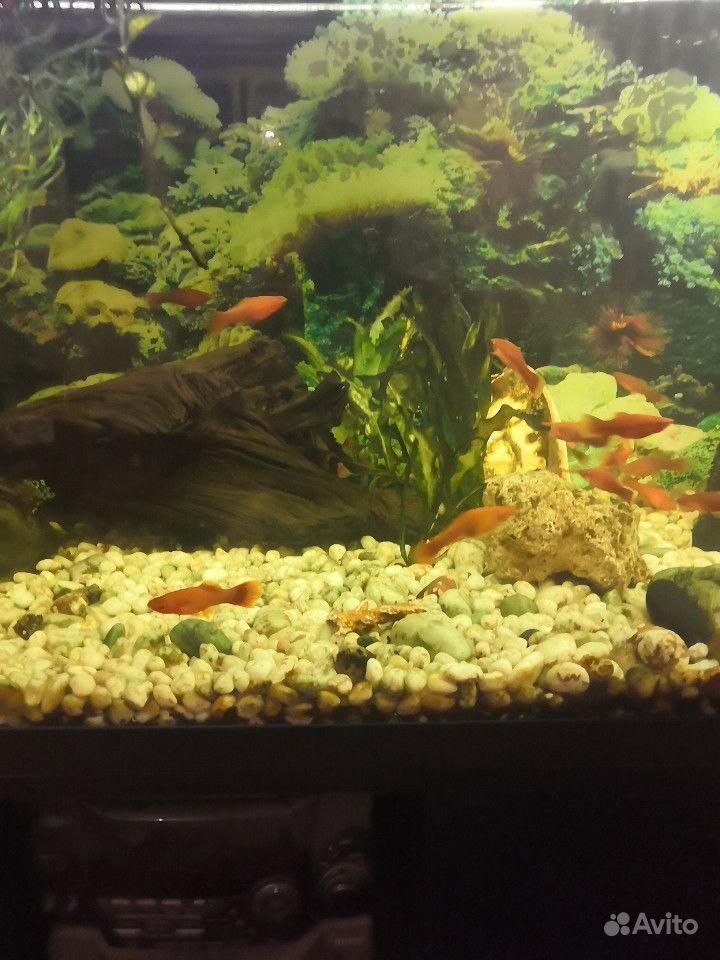 Продам рыбок купить на Зозу.ру - фотография № 2