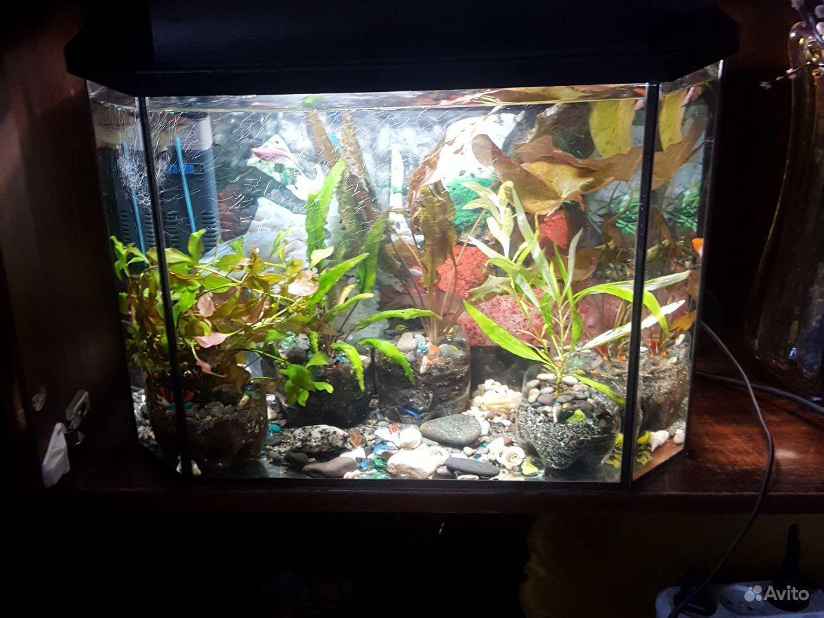 Аквариум вместе с рыбками+фильтр+растения купить на Зозу.ру - фотография № 2