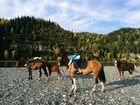 Лошади для фотосессии, конные прогулки