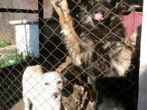 Подросшие щенки ждут семью — Собаки в Магнитогорске