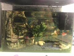 Аквариум с рыбками и всеми аксессуарами