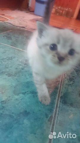 Авито котята в добрые руки в брянске