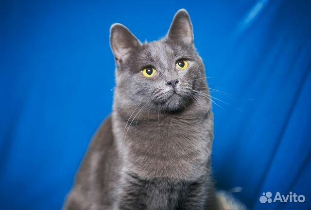 Серый кот означает
