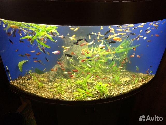 Аквариумные рыбки  Аквариумный интернетмагазин AquaShop