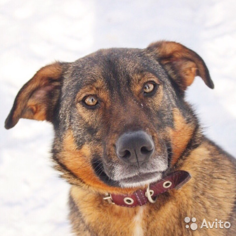 Собака в дар некрупная купить на Зозу.ру - фотография № 1