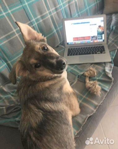 Замечательный и необыкновенный Беня - щенок в дар купить на Зозу.ру - фотография № 7