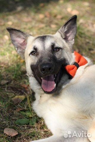 Симпатяга щенок Локи в дар в добрые руки купить на Зозу.ру - фотография № 1