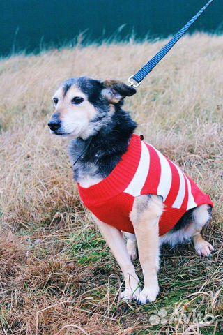 Собака ниже колена в дар купить на Зозу.ру - фотография № 10
