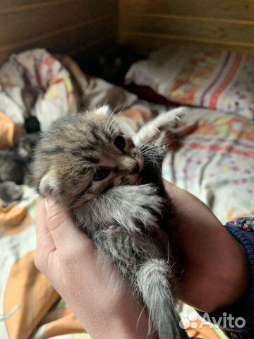 Котята в добрые руки 89642626171 купить 7