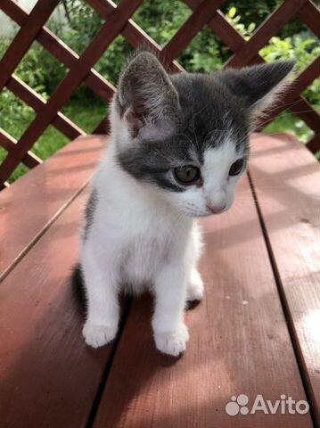 Котенок купить 1