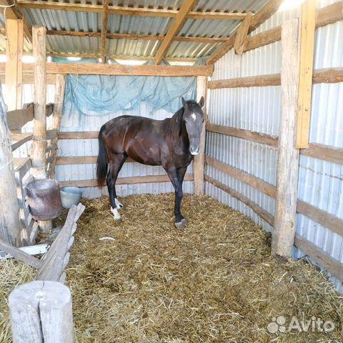 Лошадь  89280884007 купить 1