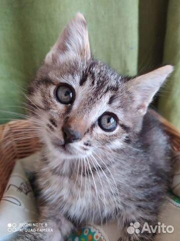 Котята ищут теплый дом  89867112072 купить 1