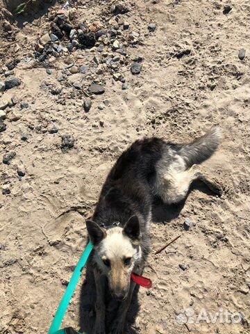 Потерялась собака  89237907160 купить 3