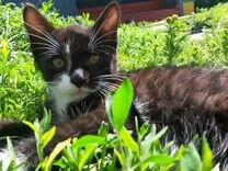 Котята 4 месяца в добрые руки