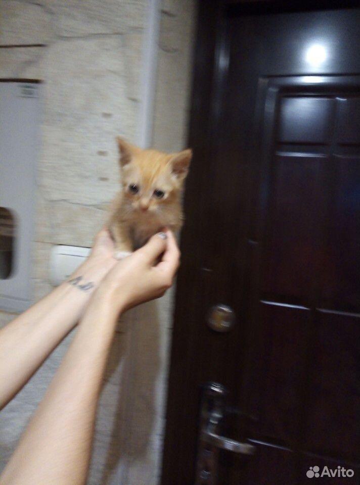 Котенок в добрые руки  89634909939 купить 2