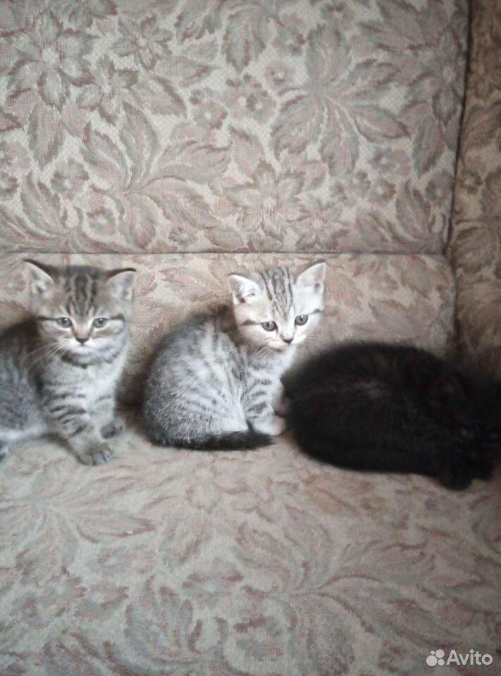 Кошка  89502432400 купить 3
