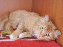Котик Мандаринчик. 8 месяцев