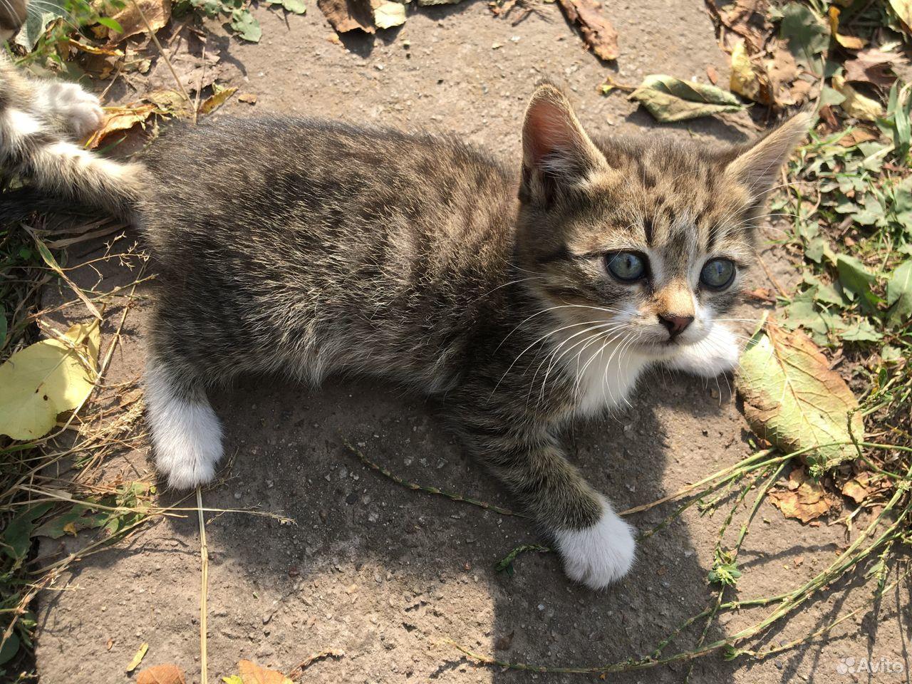 Отдам котят в добрые руки  89096353184 купить 1