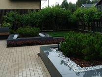 Растения из питомников Спб
