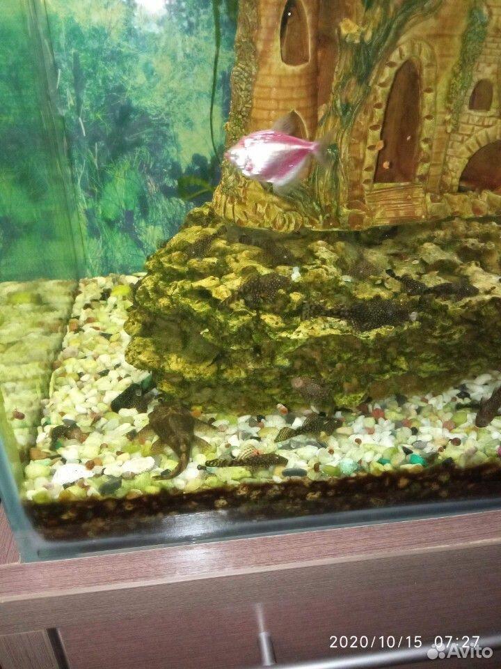 Рыба  89069632332 купить 6