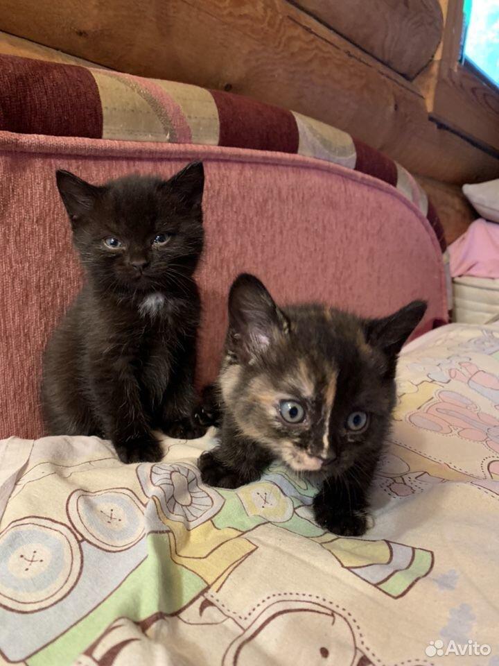 Котята  89125264651 купить 3
