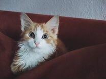 Прекрасный котёнок