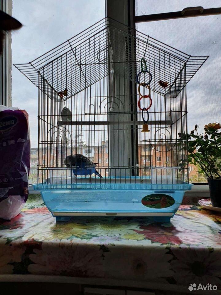 Попугай (пожилой самец) вместе с клеткой