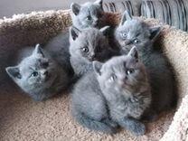 Милые котята)