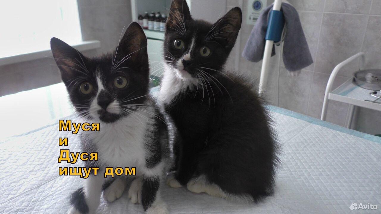 Муся и Дуся ищут дом  89206511146 купить 1