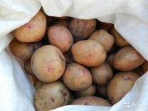 Картофель на корм